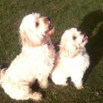 Yogi and Bella