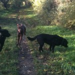 Rudy, Todd and Alfie