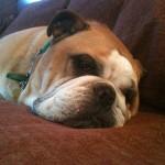 Sleepy Murphy