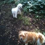 Rufus and Buddy